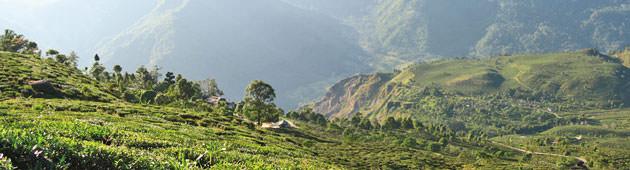 Lebensbaum Herkunfts-Tee Biotee