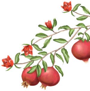 logona-granatapfel-pflegeserie-pikt