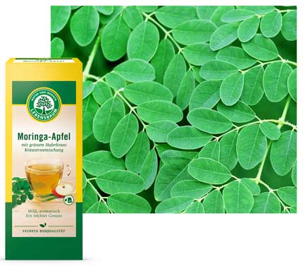 lebensbaum-moringa-apfel-kraeutertee