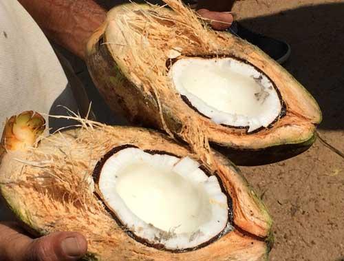 morgenland-bio-kokosprodukte